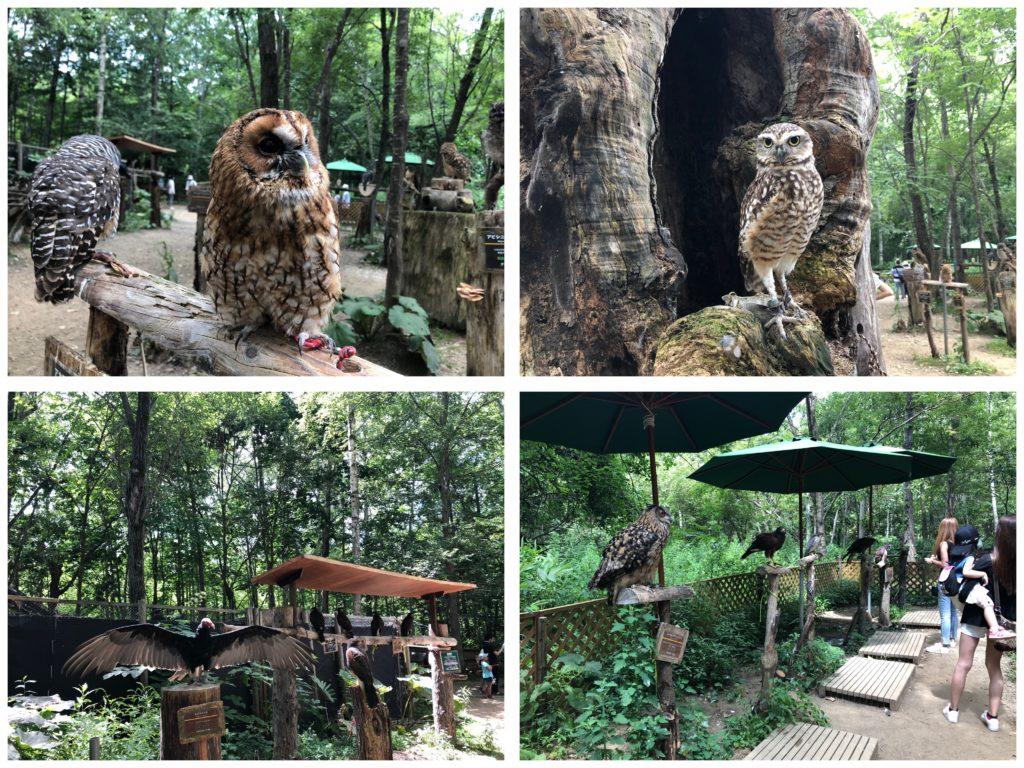 ノースサファリデンジャラスの森フクロウ