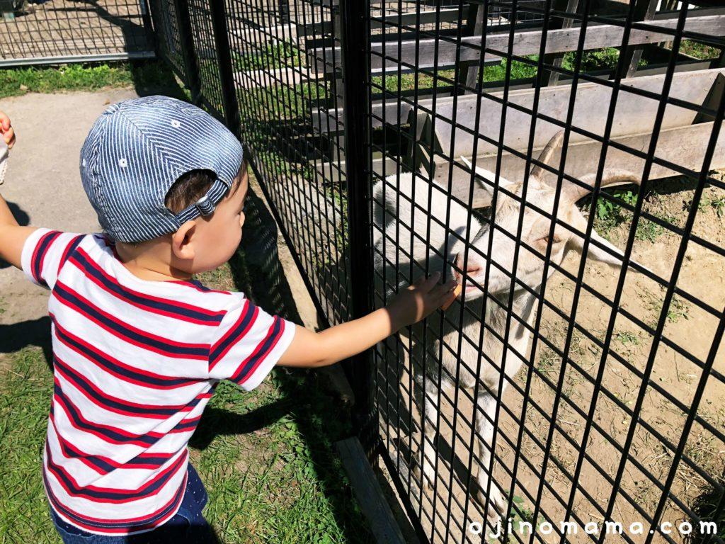 栗山公園なかよし動物園ヤギエサやり