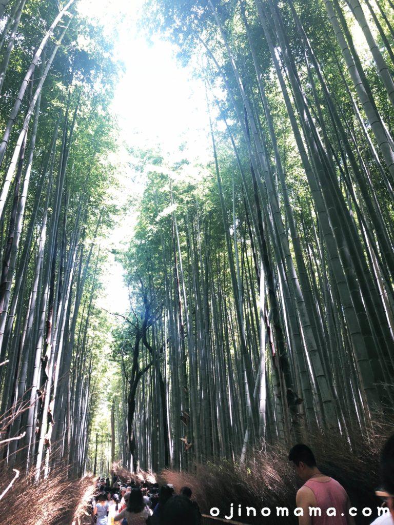 京都観光嵐山の竹林