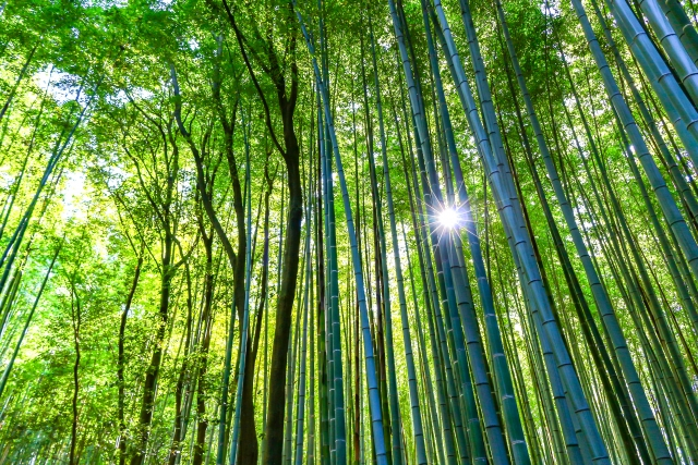 子連れ京都観光嵐山
