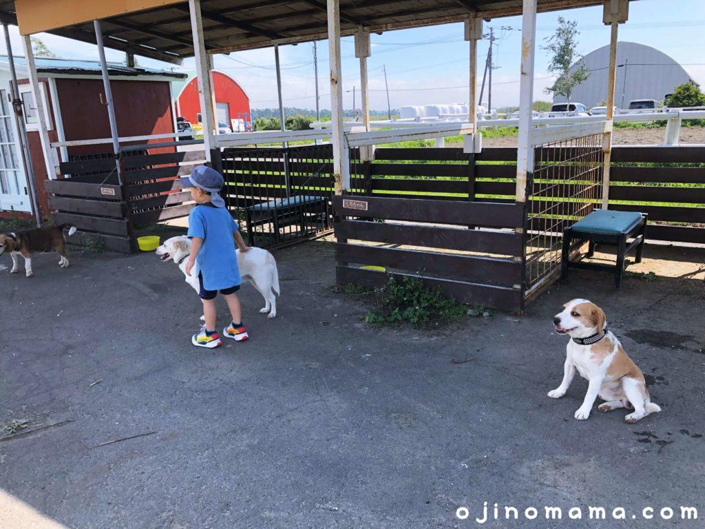 アースドリーム角山農園看板犬