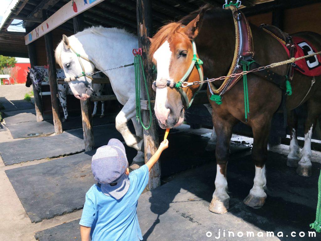 アースドリーム角山農園馬にんじん