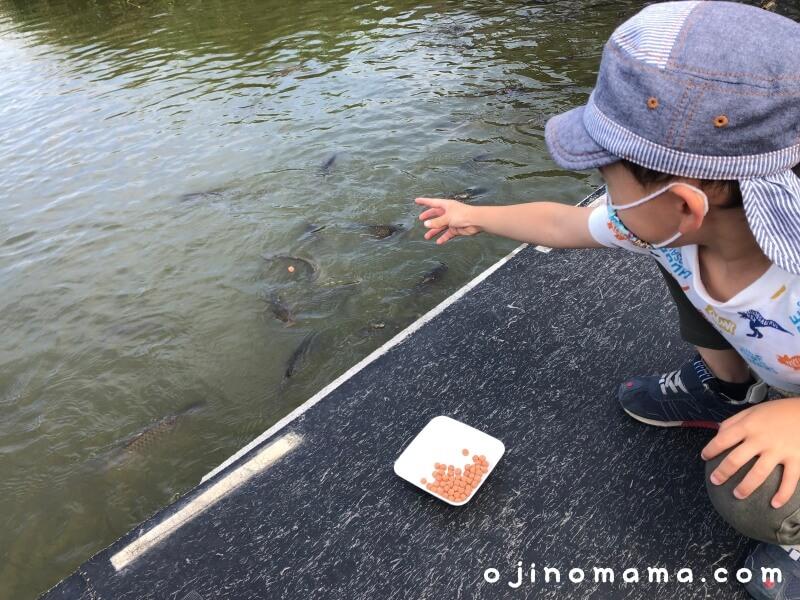 江別アースドリーム魚餌やり